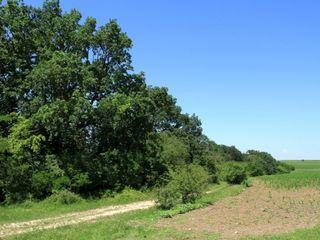 Cumpărt casă-lot de teren in zăbriceni, volodeni, blesteni, alexeevca r-nl edineț