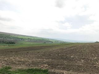 Teren agricol prelucrat, 3.38 ha