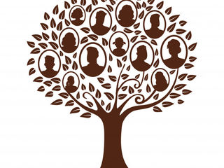 Провожу генеалогическое исследование, составляю семейное древо