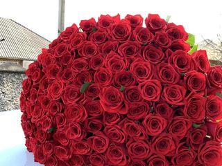 Trandafiri cele mai accesibile preturi!