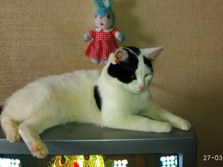 Подарим котят