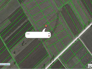 Продаю 8 соток под строительство в с. Пашкань, Криулянского р-она, в 15-и км. от Кишинева