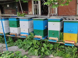 Папа продает свои 8 ульев с медом и пчелами