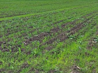 Ofertă bună pentru agricultori !!! Un lot de teren arabil fertil în orașul Râșcani.