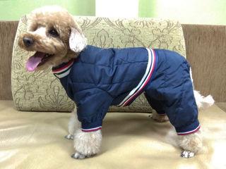 """Зоосалон """"Mister Dog"""" предлагает одежду для собак от 300 л"""