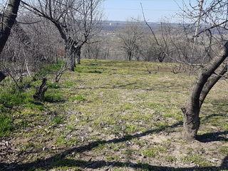 Se vând 2 terenuri în satul Bâc a câte 6,5 ari, în total  - 13 ari.