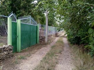 Продается дачный участок в кооперативе Coacăza Roșie, с. Охринча,Р-н Криуляны.