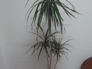 Цветы-растения- деревца- Ёлки