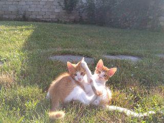 Котята хорошим людям в дар