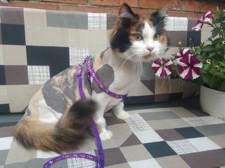 Стрижка кошек без наркоза в зоо-салоне мистер дог