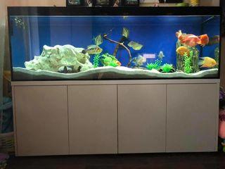 Бесшумный, самоочищающийся аквариум 200*60*60 см+самп 100 литров+ тумба