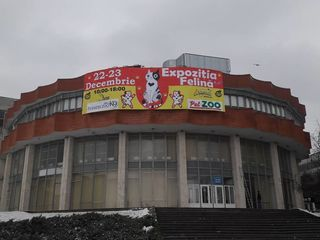 """22-23 декабря международная выставка кошек """"Золотая кошка Молдовы"""" WCF"""