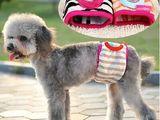 Физиологические трусики для собак