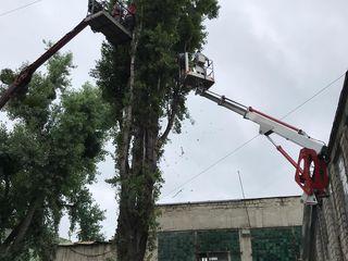 Tăierea copacilor înclinați sau deteriorați ieftin !!! дёшево