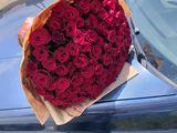 Super oferta trandafiri , direct de la crescatori