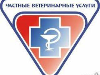 Doctor veterinar la domiciliu non-stop in Chisinau si suburbii.