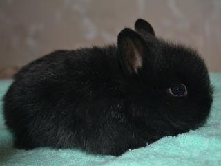 Кролики пушистики!!!