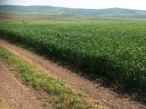 Vinzare terenuri arabile 100 ha ; 300 ha; 500ha