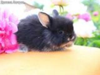 Карликовые крольчата.