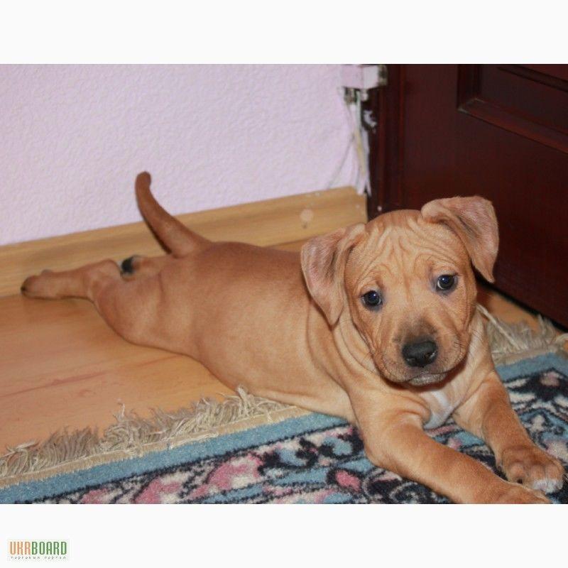 Доска объявлений на house-dogru - объявления о купле и продаже щенков