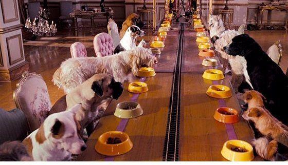 Фото с животными как бизнес