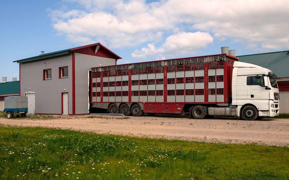 Бизнес планы на свинокомплексы бизнес план сельское хозяйство бесплатно