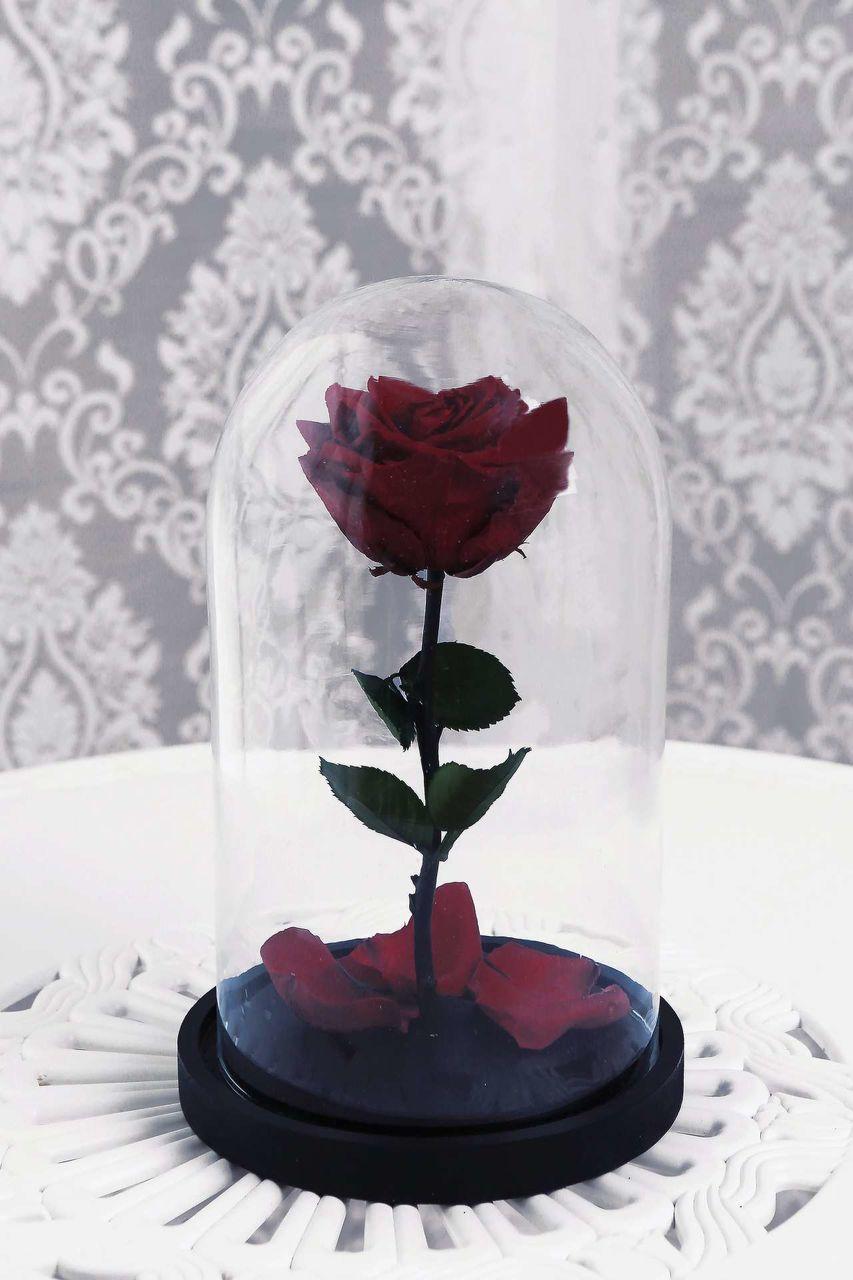 живота рекомендована розы под куполом картинки нас только лучшие