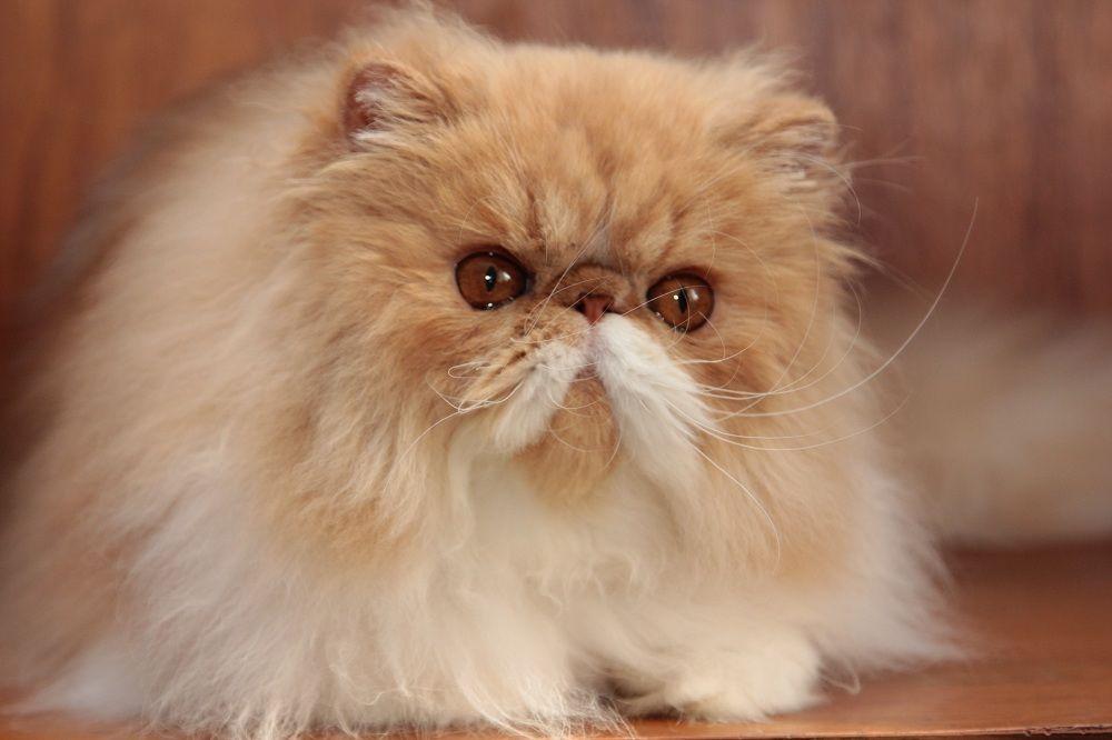 коты экстремалы фото методами микробиологического исследования