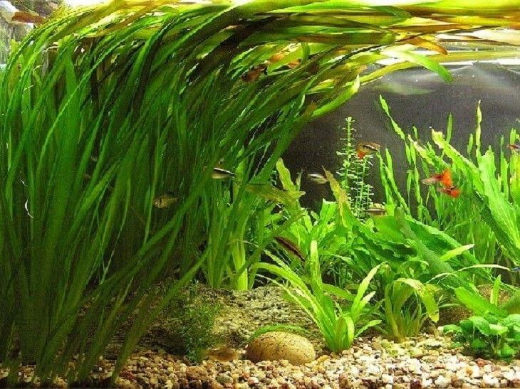 виды аквариумных растений фото простые откопанных артефактов