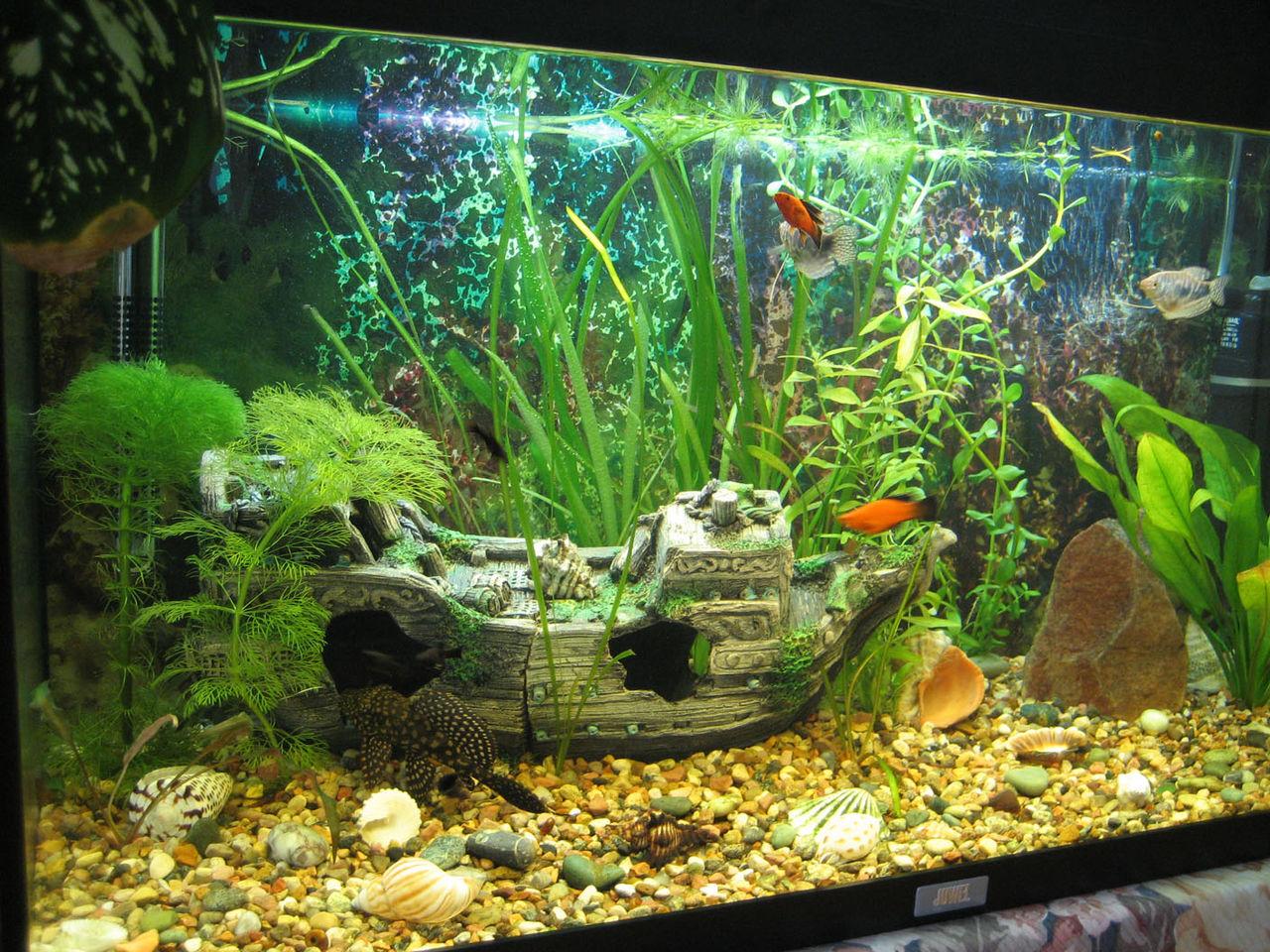 Как украсить красиво аквариум