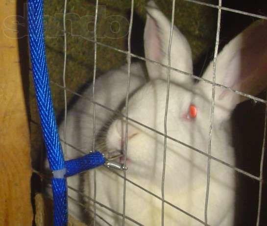 Поилка для кроликов ниппельная