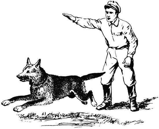 там рисунки кинолога с собакой разбираемся