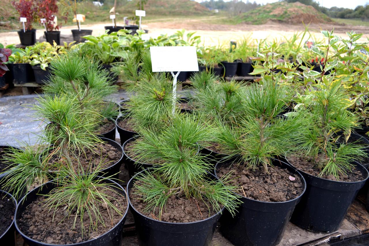 Технология выращивания деревьев 78
