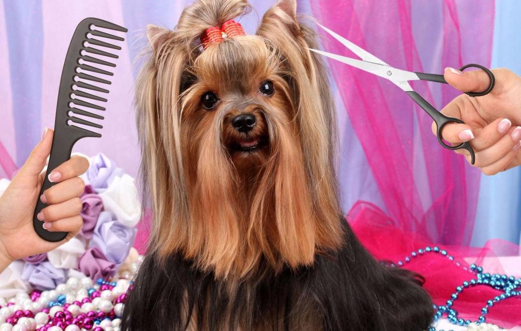 Прикольные картинки стрижка собак