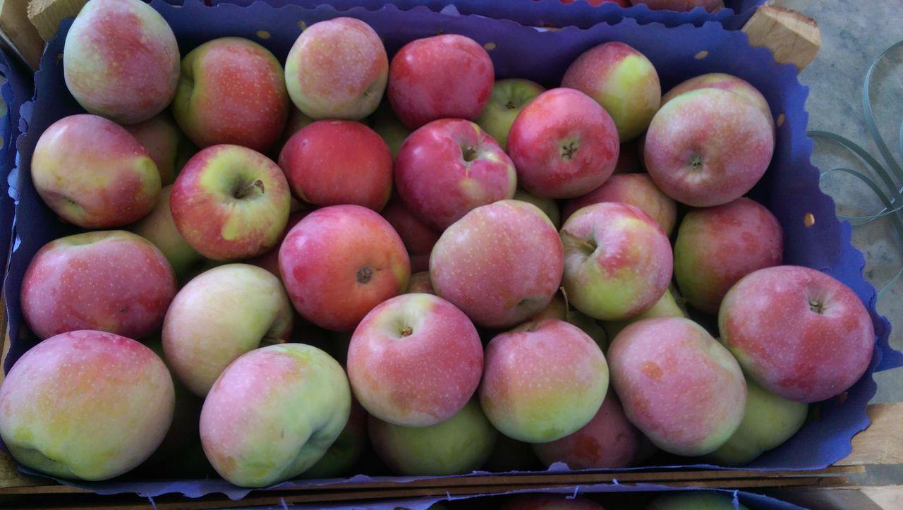 Яблоня сорта лобо описание фото