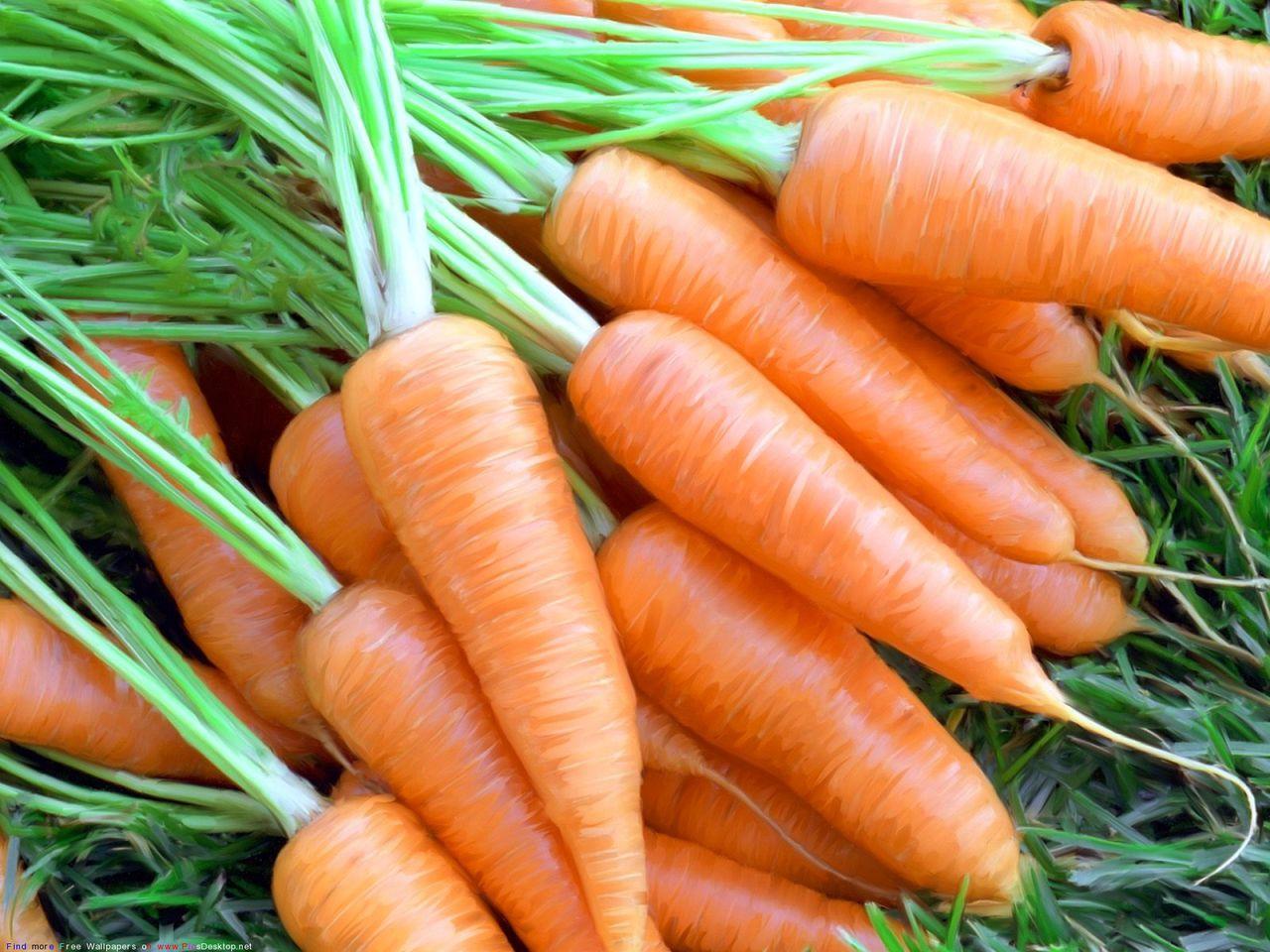Выращивание моркови как бизнес: организация и план - бизнес идеи 18