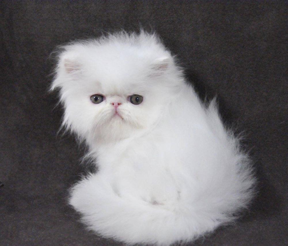 готовы предложить коты экстремалы фото россии породили