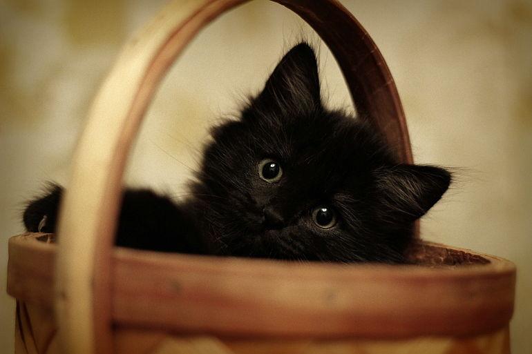 шла котики пушистики фото черные темным фоном