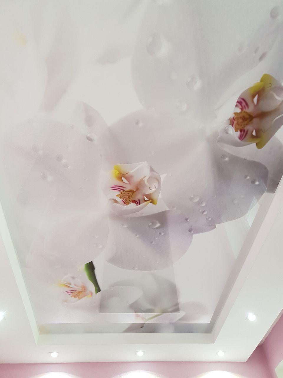 Фото картинки цветок на потолок