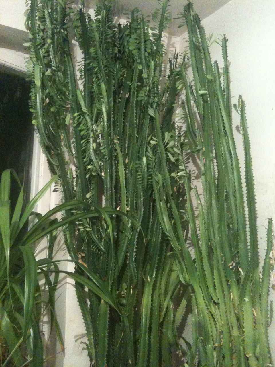 Каталог комнатных растений