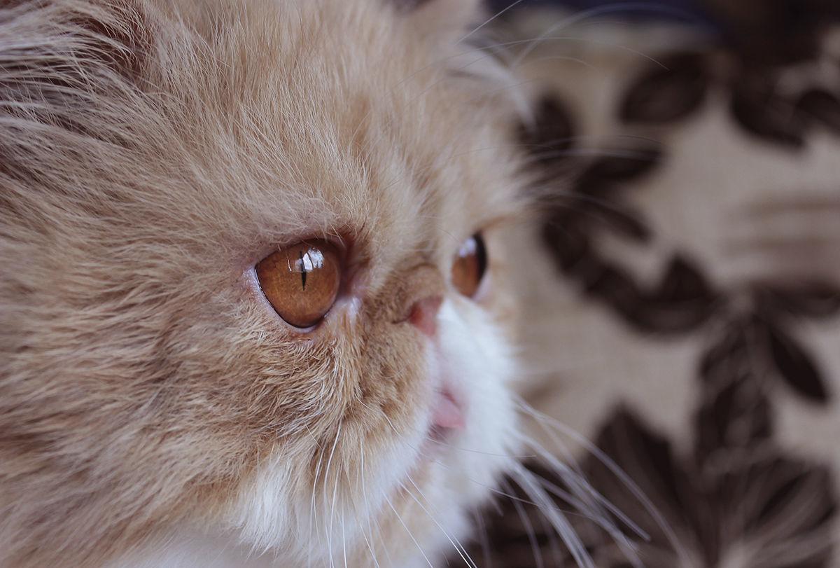 коты экстремалы фото как лисицы