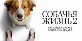 Câinele, adevăratul meu prieten 2