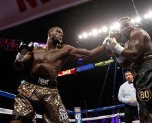 WBC обязал Уайлдера и Стиверна начать переговоры о матче-реванше