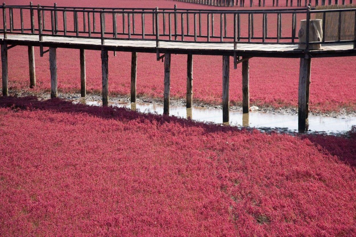 Imagini spectaculoase: Cum a apărut plaja roșie din China