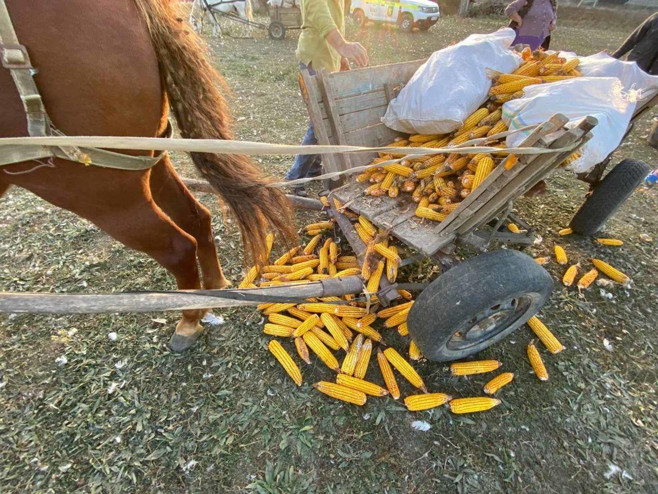 Caz tragic la Nisporeni: Un bărbat a fost târât de calul său pe câmp