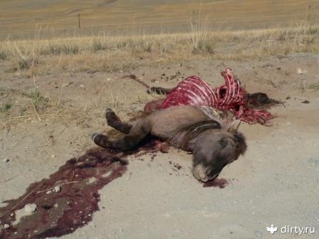 К чему снятся убитые животные
