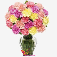 купить Букет из разноцветных 25   гвоздик в Кишинёве