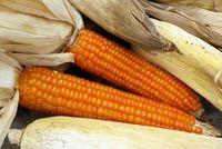 Вибрион - Семена кукурузы - Евралис Семанс