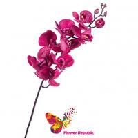 cumpără Orhidee violet în Chișinău
