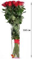 купить Роза красная Ecuador 160 см Поштучно в Кишинёве